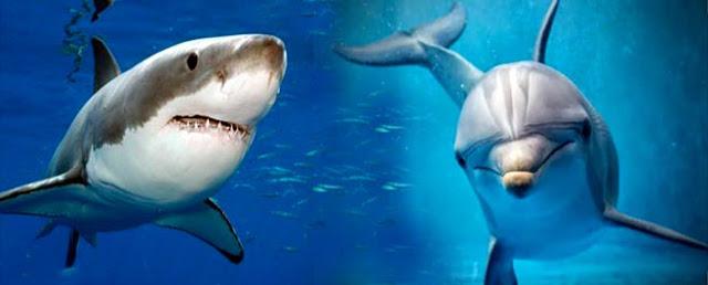 Tiburón-versus-delfín